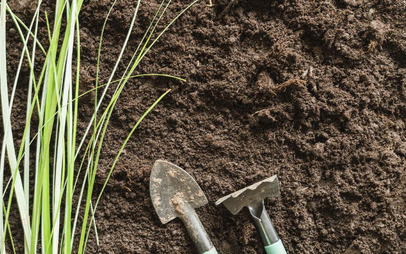 Improve the fertility of the soil