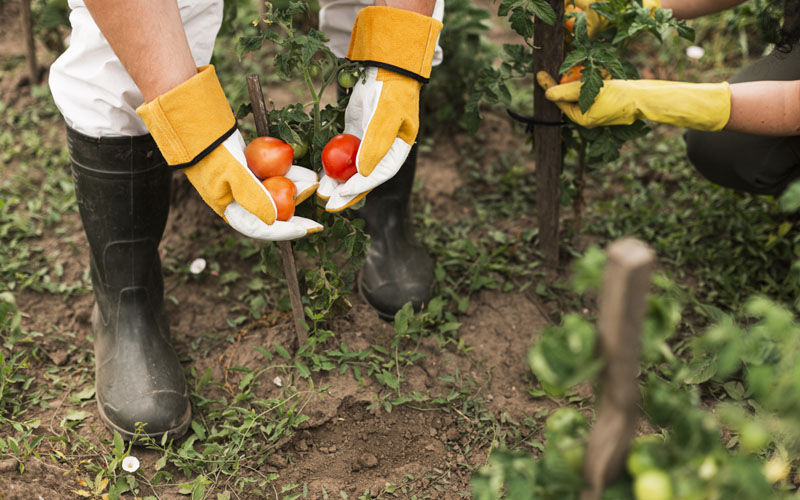 Best time to plant hardy vegetables