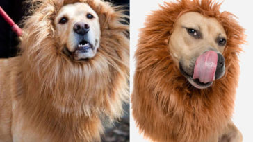 How To Make Your Dog Look Like A Lion