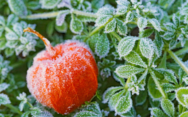Know about the frost dates