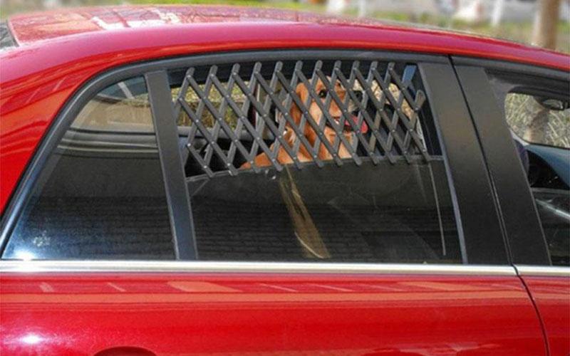 Pet Travel Car Window Mesh