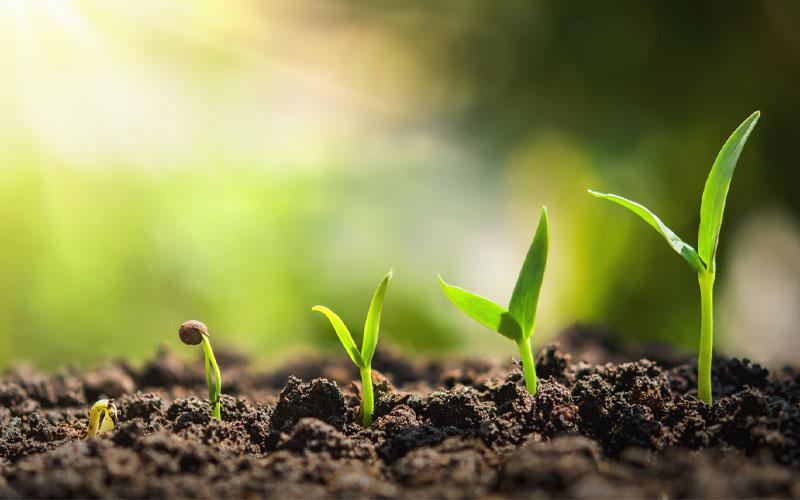 Plant easy-to-grow species