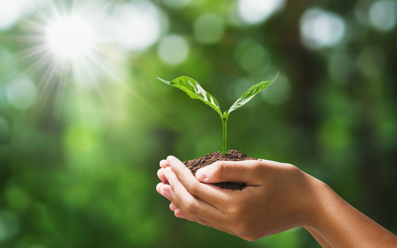 Prevent the seedling from diseases