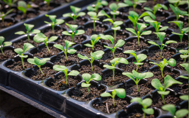 Provide heat to germinate powerful seedling