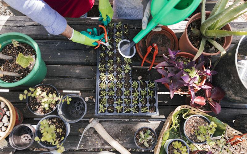 Prune the seedling