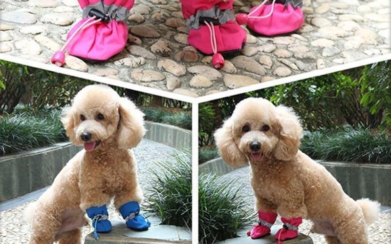Adorable Dog Booties