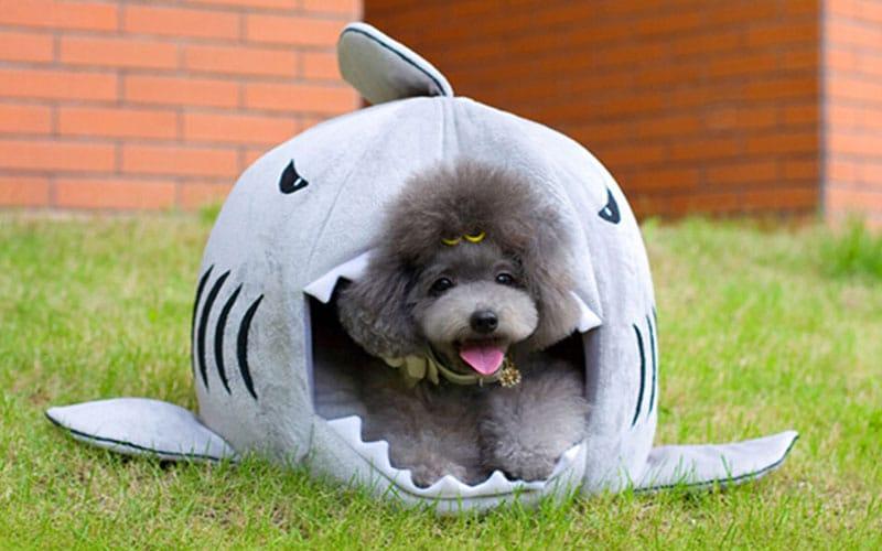 Best Selling Shark Pet Bed