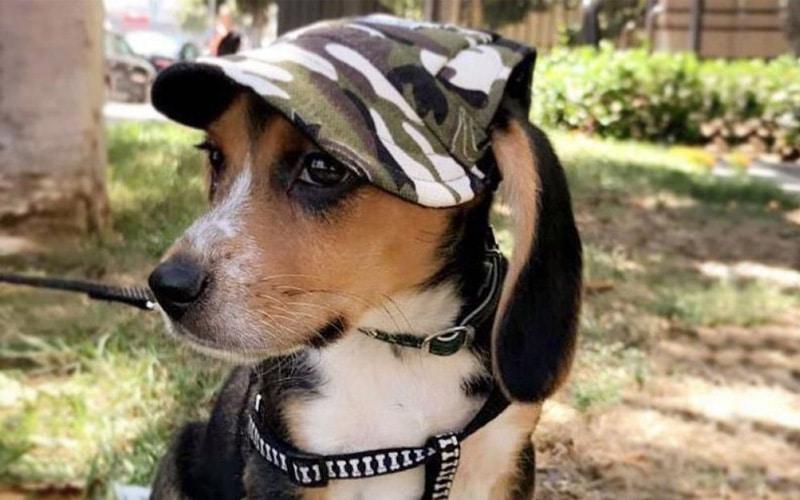 Machiko Dog Hats