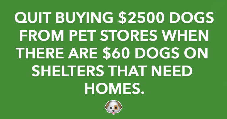 Quit Buying $2500 Dogs from Pet Stores When There are $60 Dogs in Shelters that Need Homes