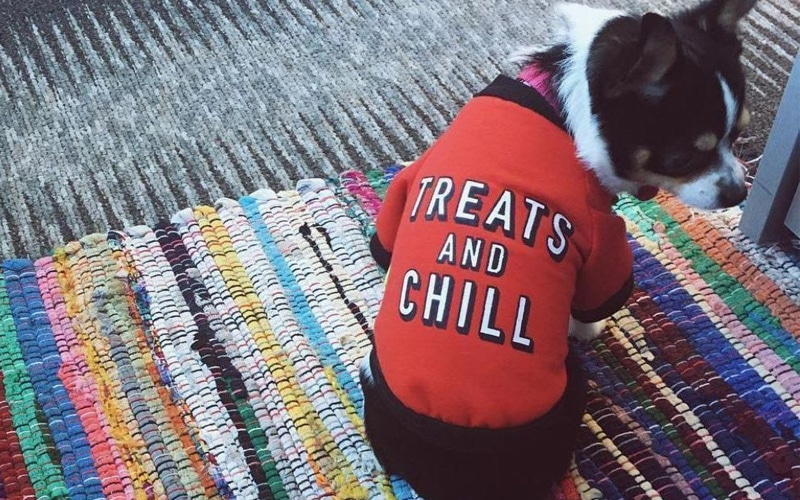 Treats And Chill Dog & Cat T-Shirt