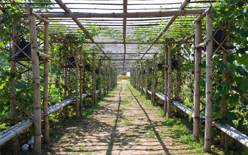 Use bamboos to provide shade
