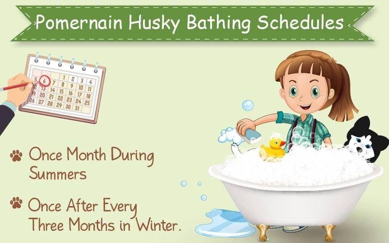 Pomeranian Husky Bathing Schedule