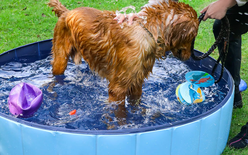 Outdoor Collapsible Dog Swimming Pool