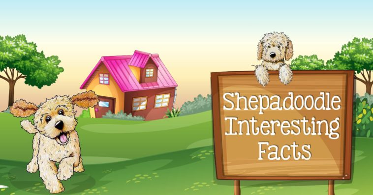 Top 13 Fun Facts You Didn't Know About Shapadoodles