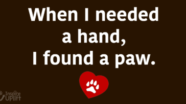 When I need a hand i found a paw