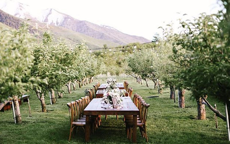 Winery Orchards