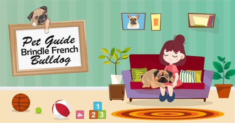 french bulldog feature