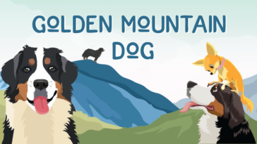 golden mountain dog
