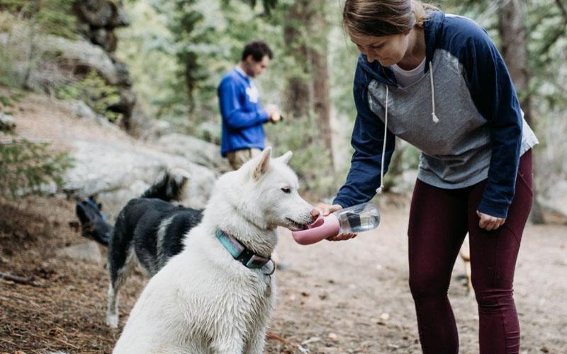 Dog Ownership and Immunity