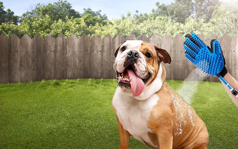 Pet gloves