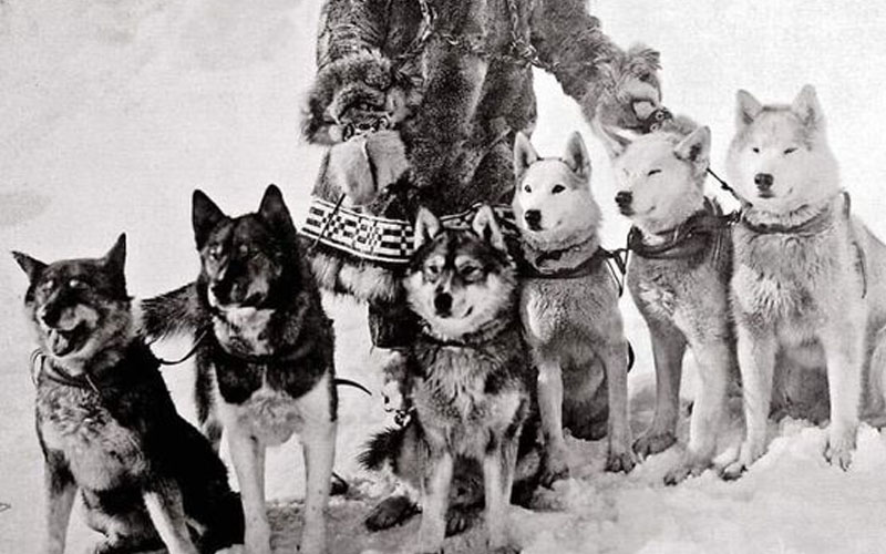 Fifteen Dogs and Their Fate in The Snow