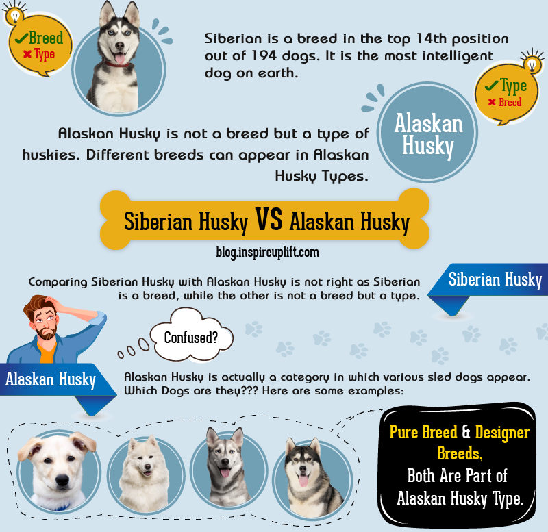 Alaskan Husky Vs. Siberian Husky