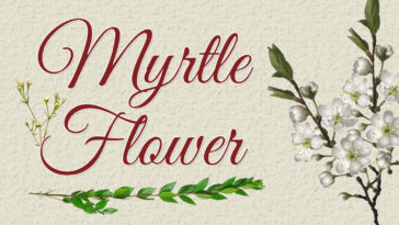 Mytrle Flower