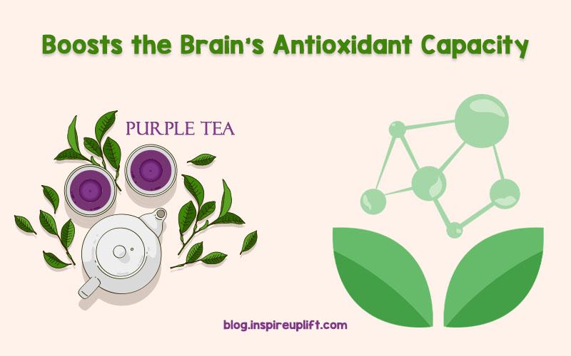 Boosts the Brain's Antioxidant Capacity