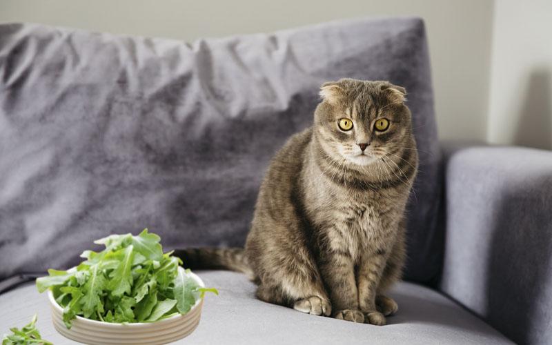 Can Cats Eat Arugula
