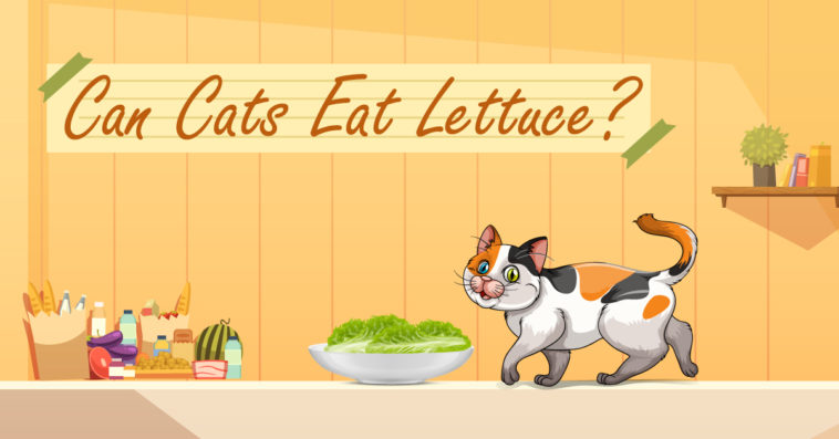 Cat-eat-lettuce