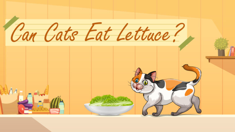 Cat-eat-lettuce