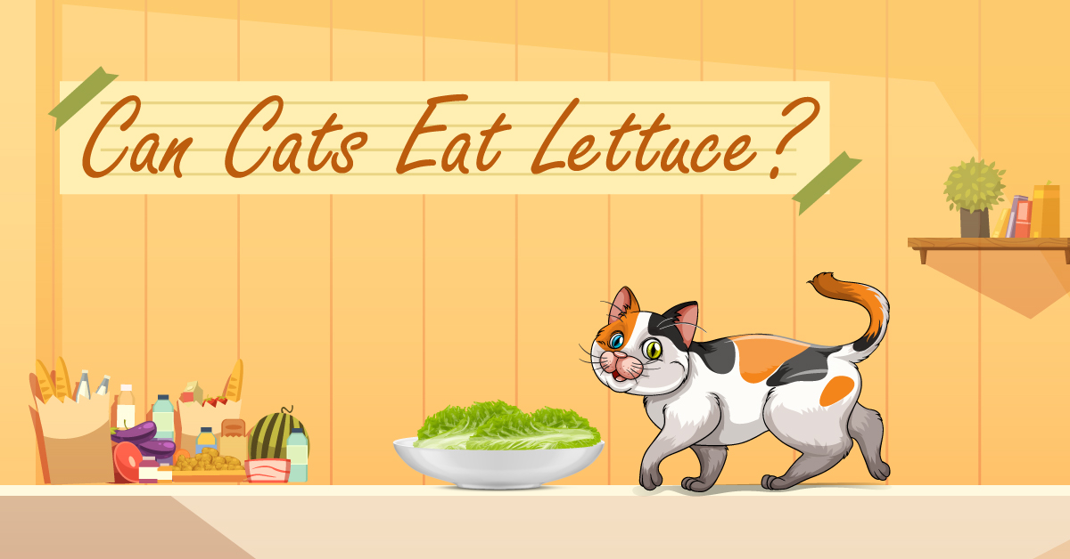 6 Reasons Why Cats Can Eat Lettuce With 4 Feeding Ways