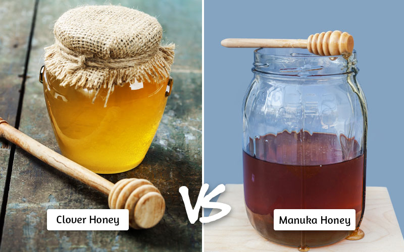 Clover Honey vs Manuka Honey