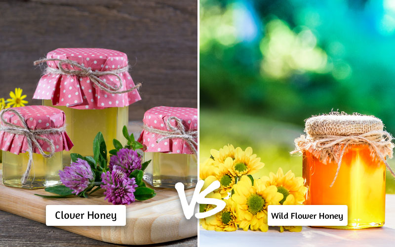 Clover vs Wild Flower Honey