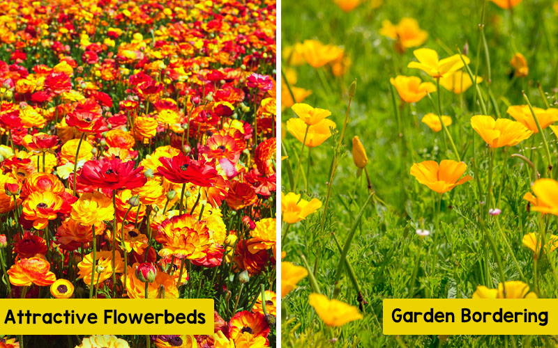 For attractive landscaping and stunning flowerbeds