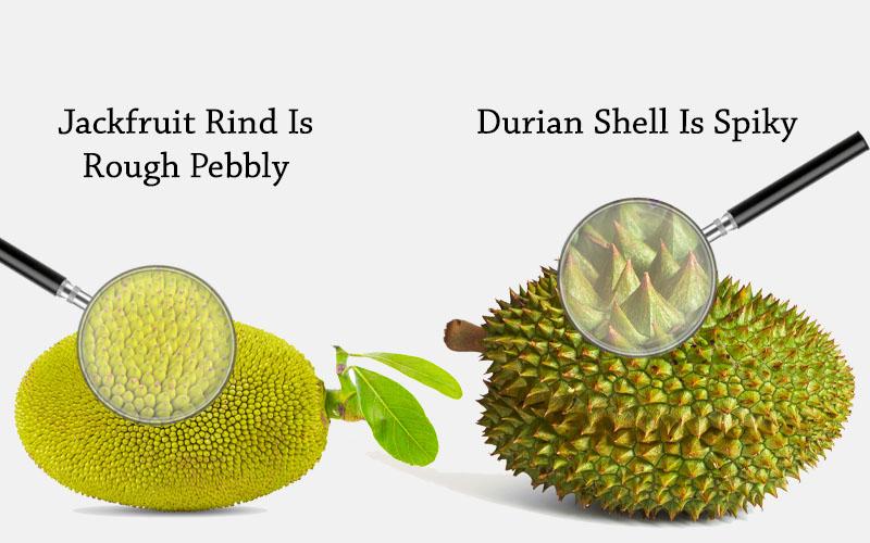 Jackfruit Vs Durian