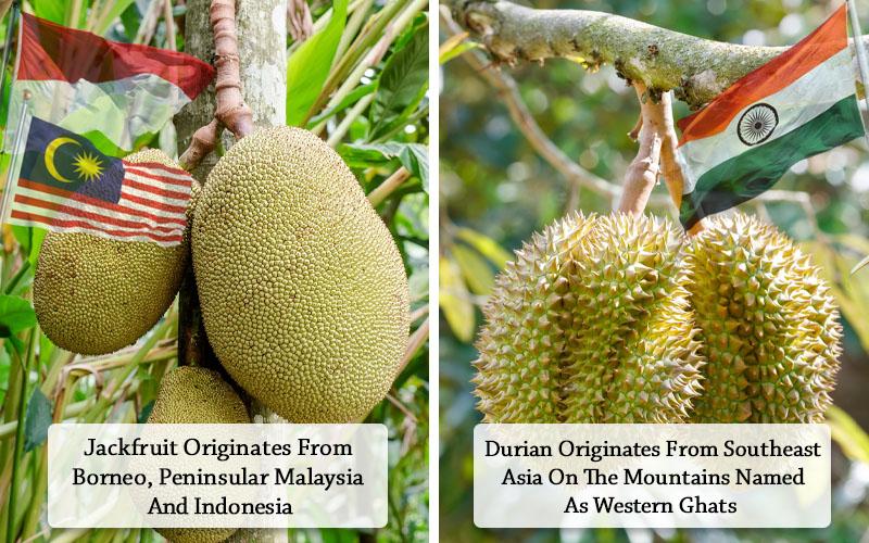 Jackfruit Vs Durian both share different vative regions