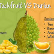 Jackfruit-vs-durian