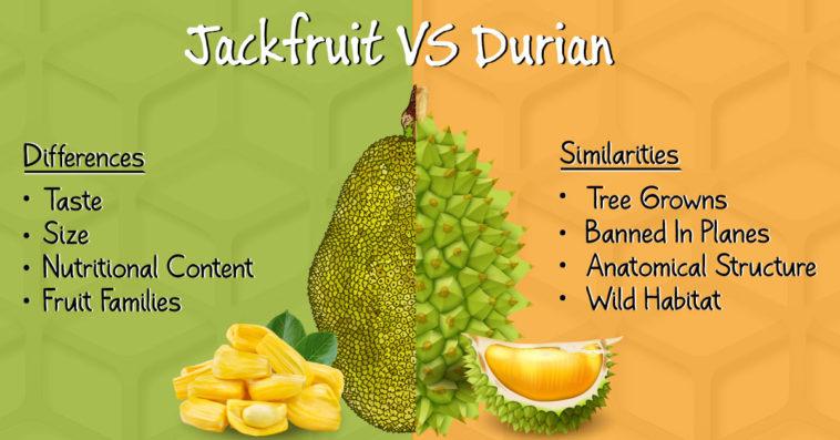 Jackfruit-vs-durian