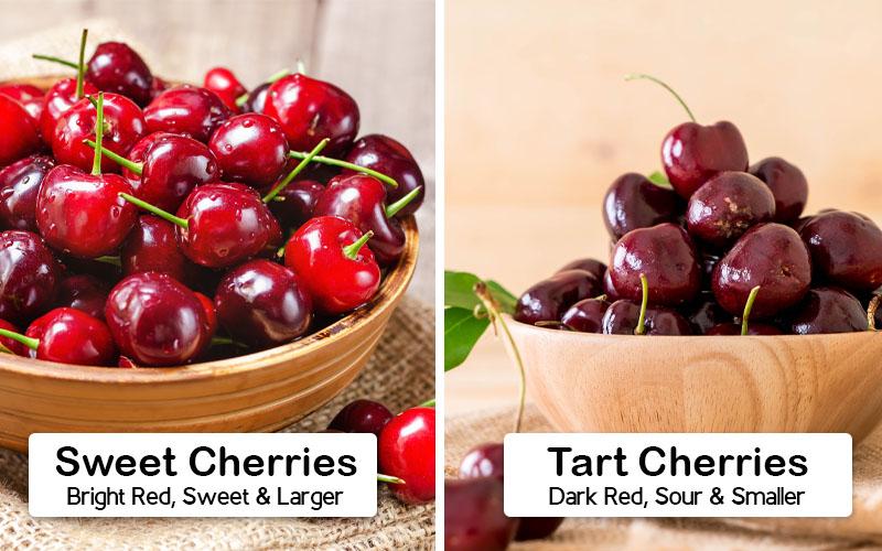 What Is Tart Cherry
