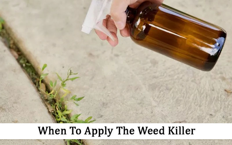 What is the best time to apply these homemade weed killers