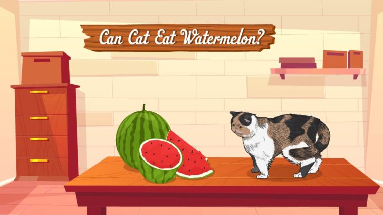 can cats eat watermelon