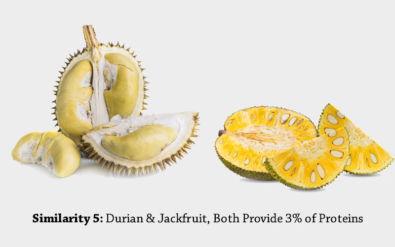 jackfruit and Durian(Jackfruit Durian Both Are Healthy source of protein)