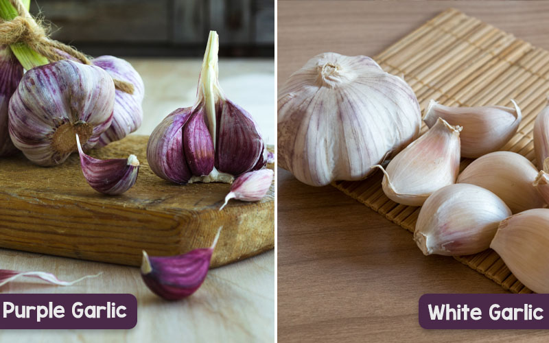 Purple vs. White Garlic
