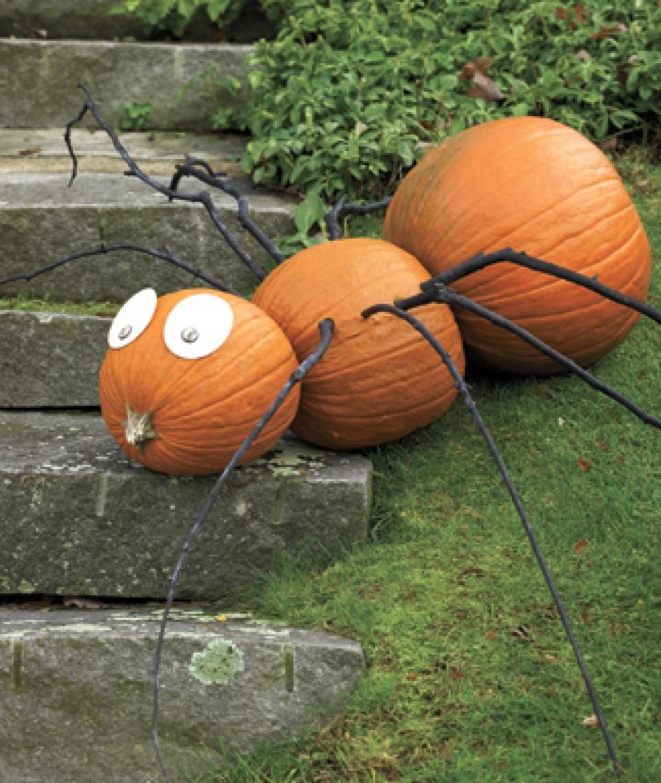 Pumpkin Ant