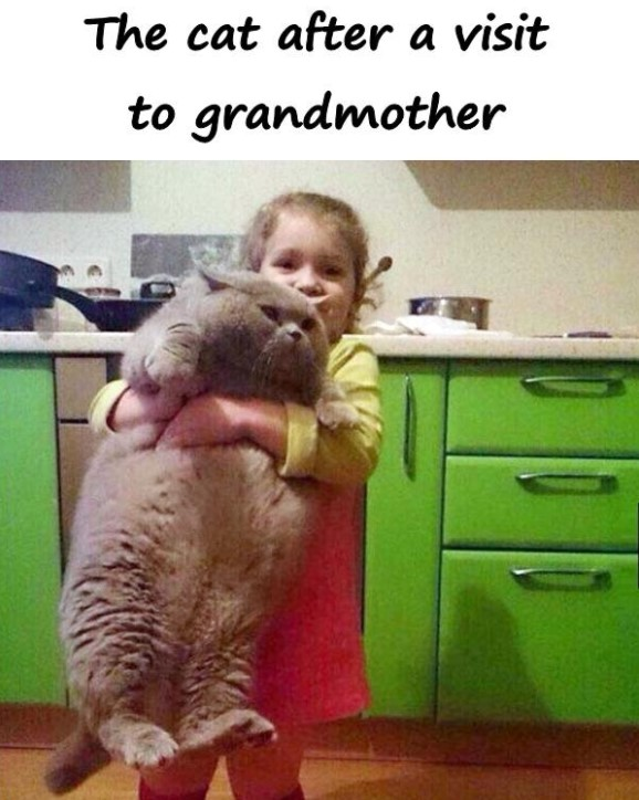 cat after visit to grandmother