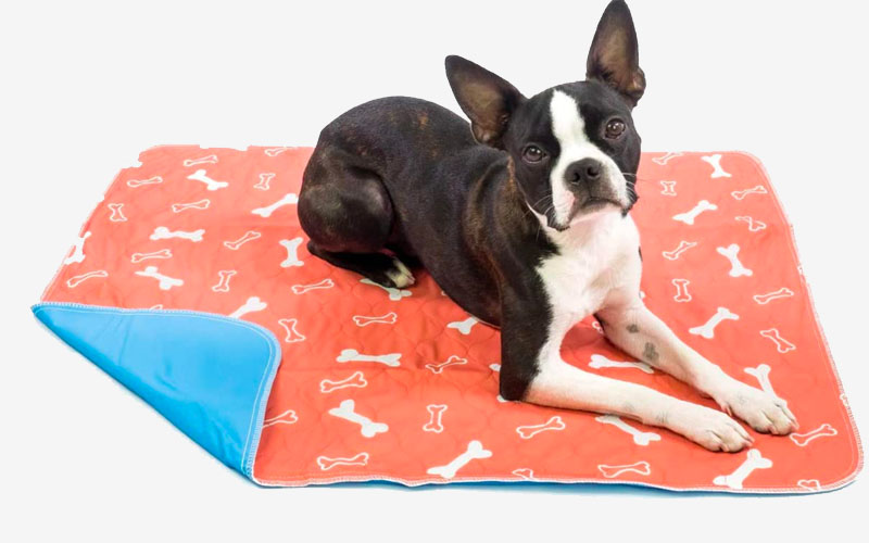 Super Absorption Puppy Pad for Pee & Dirt