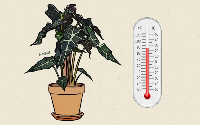 Temperature Required