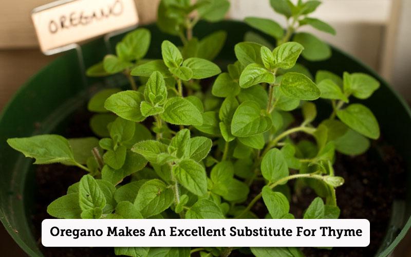 oregano thyme substitutes