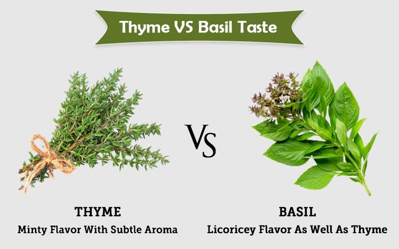 thyme spring vs Basil taste image